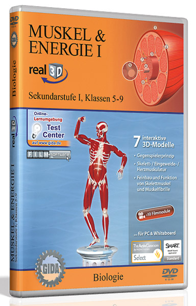 DVD: Muscle & energy I