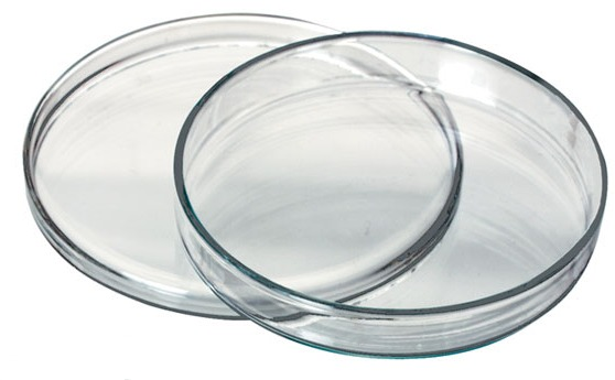 Petri dish, 120 mm