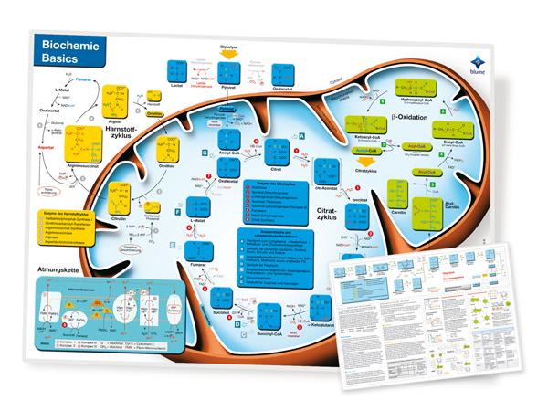 Biochemistry Basics II Poster