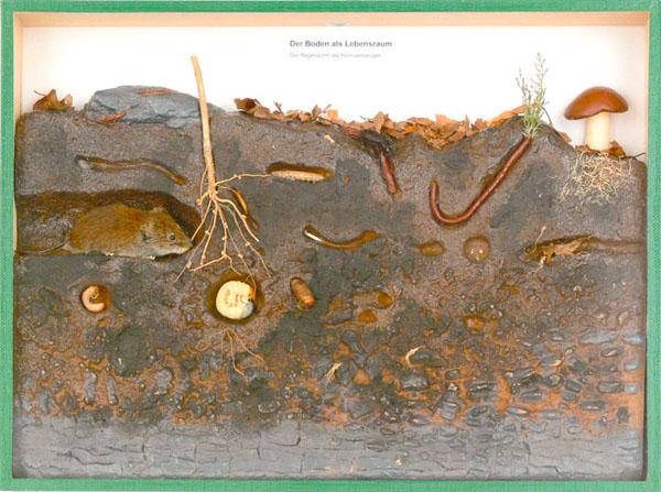 Schaukasten: Der Boden als Lebensraum