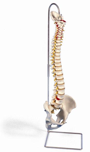 MOD: Liefetime Flexible Spine