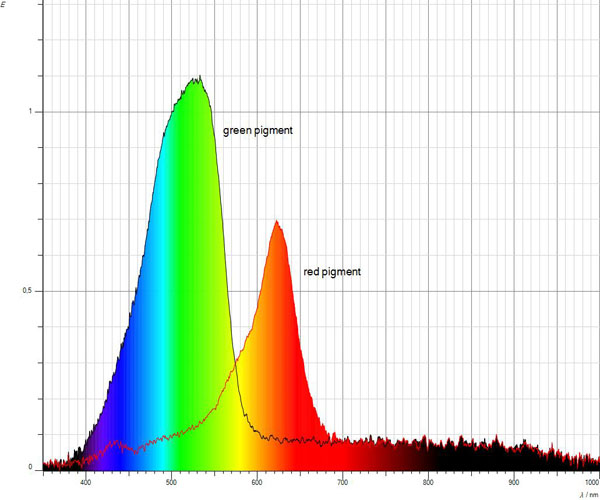 Recording of absorption spectra with a spectrometer